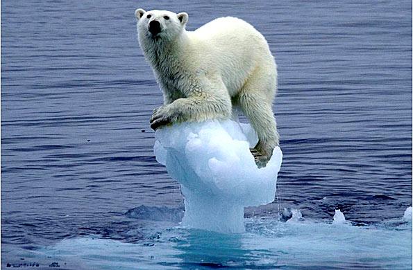 oso polar cambio climatico La UE mantendrá su objetivo de reducción del 20% de emisiones para 2020