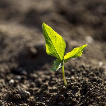 10 tendencias en sostenibilidad alimentaria